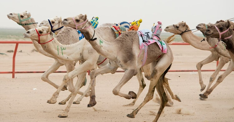 kamile i roboti dzokeji