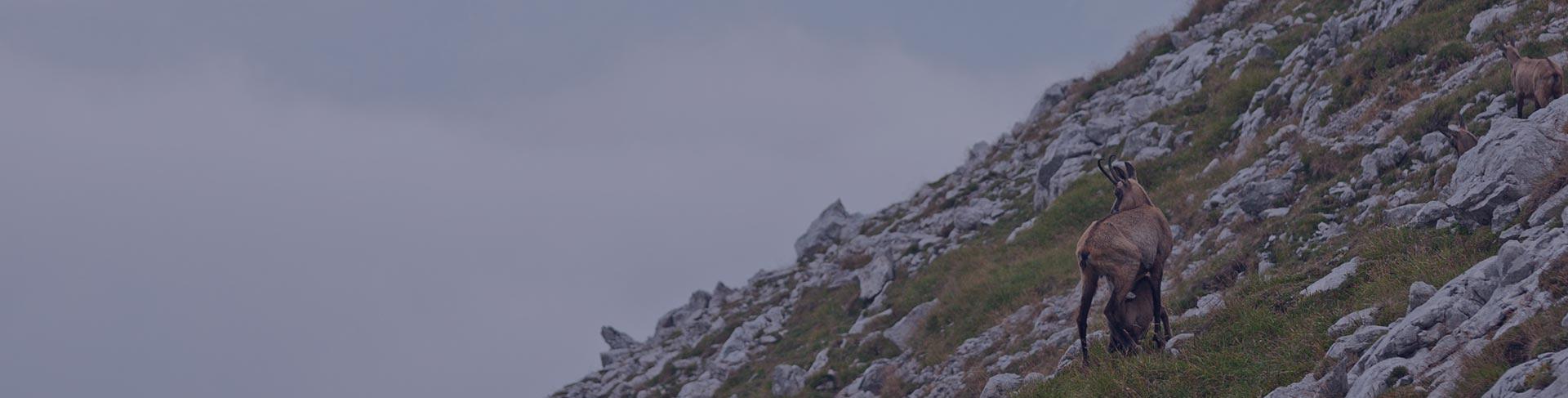Admont utisci, smeštaj i atrakcije Austrija Štajerska