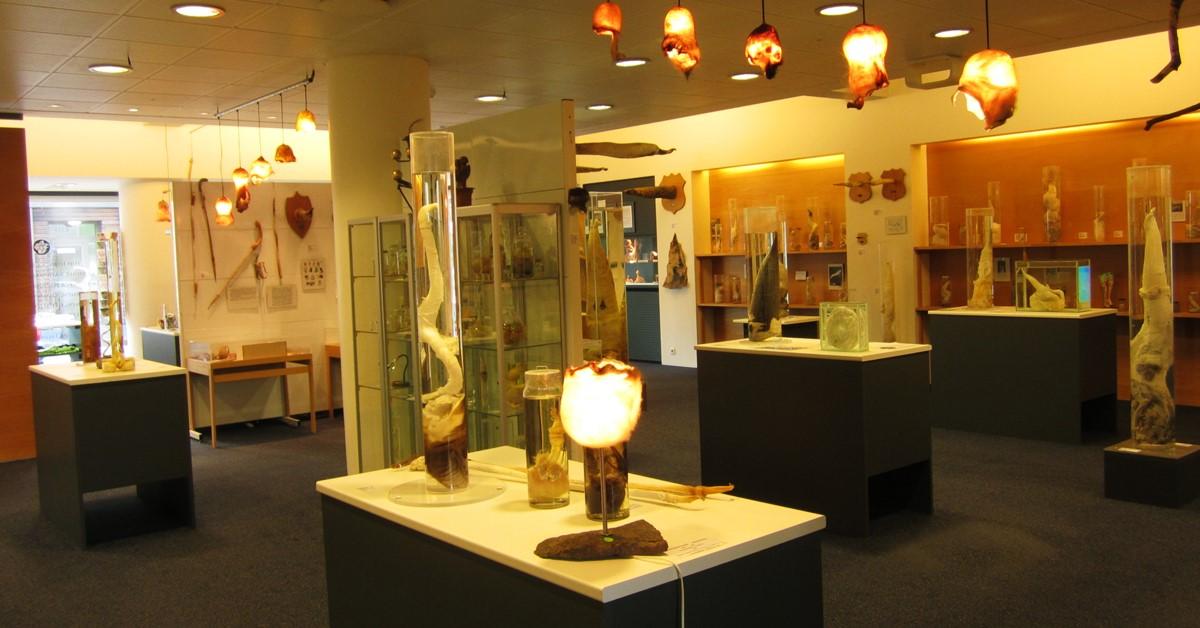Falulološki muzej - muzej falusa Rejkjavik na Islandu