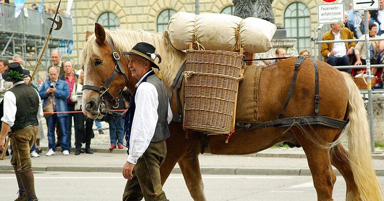 Minhen - Švaba i konj
