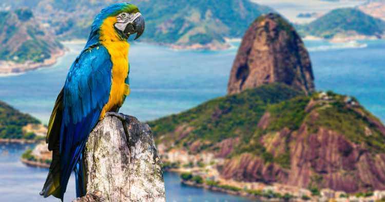 Papagaj u Riu
