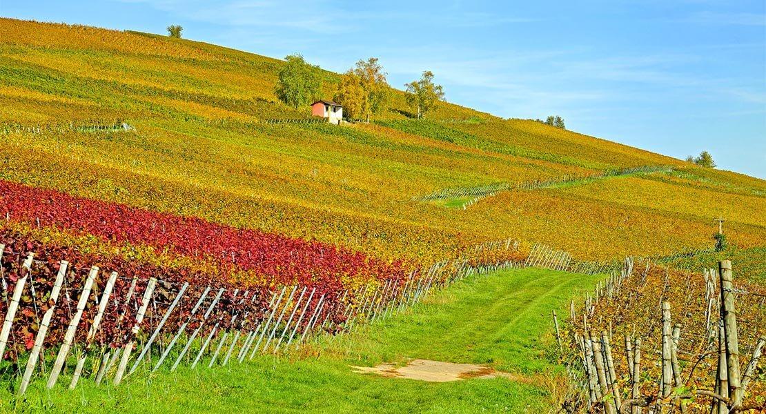 Vinogradi u Baden Badenu