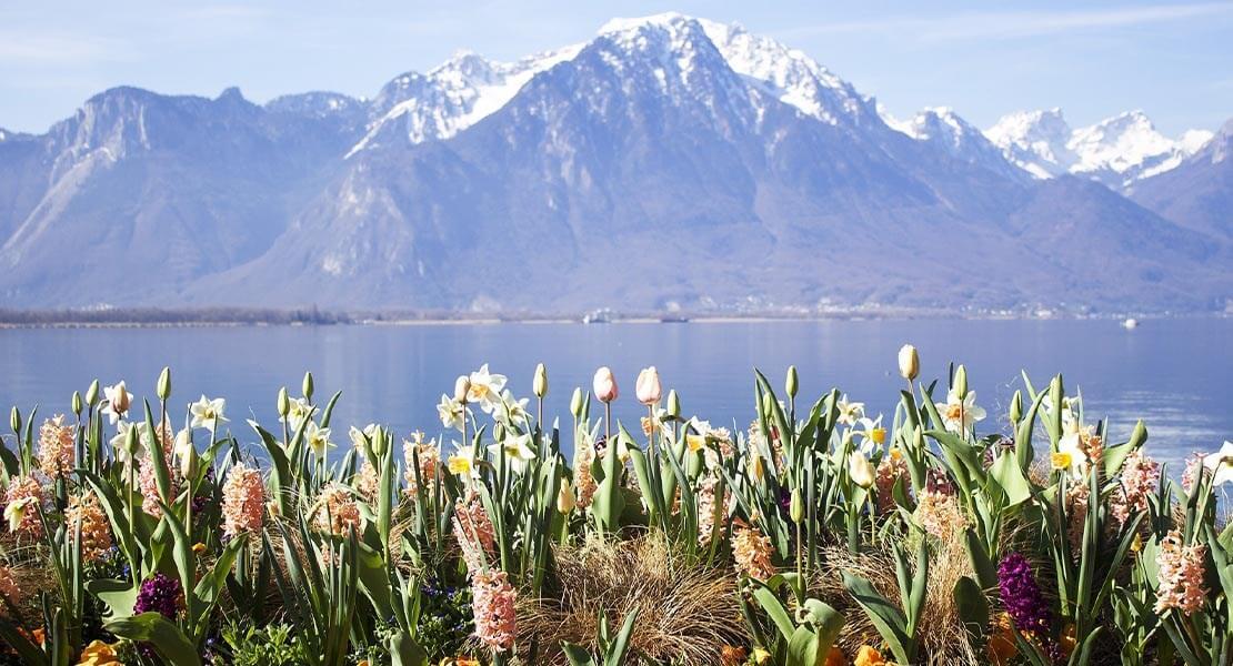 Pogled na Bernske Alpe iz Montroa