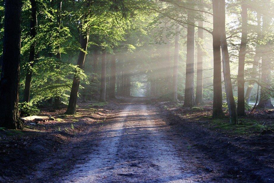 Put u šumi