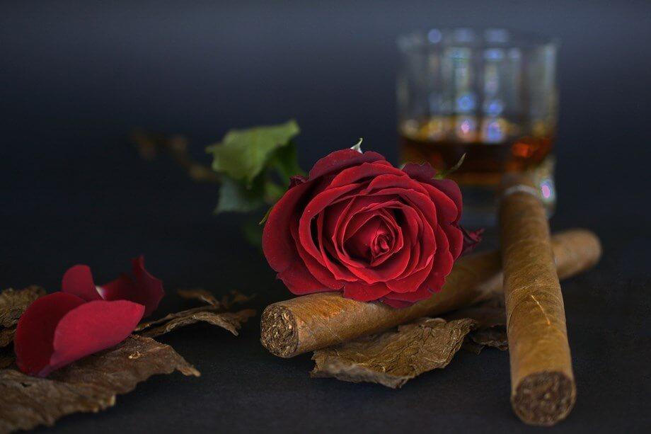 Kubanski tompus i crvena ruža