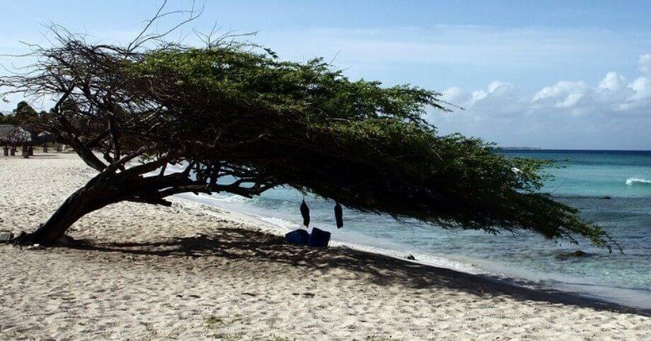 Drvo na pescanoj plazi na Arubi