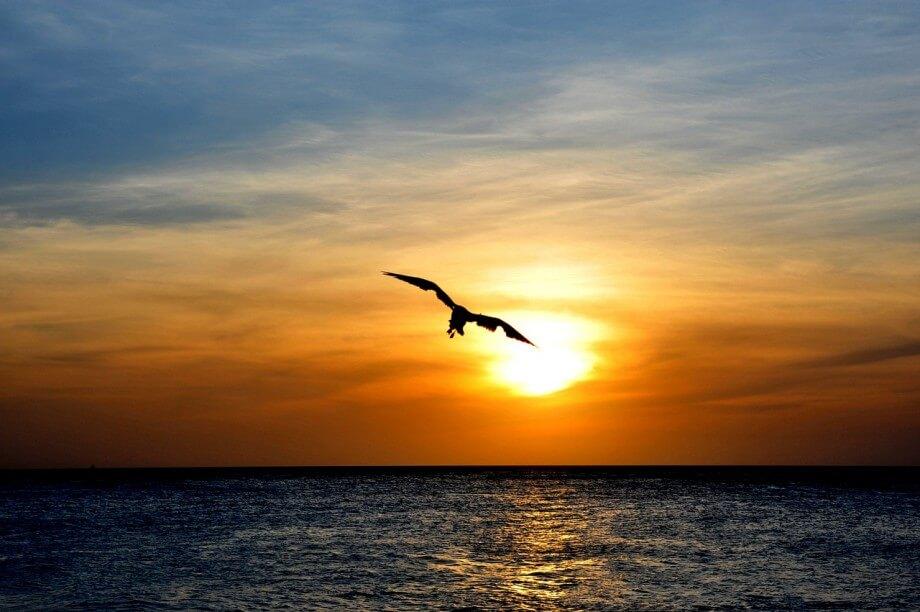 Zalazak sunca i ptica na ostrvu Aruba