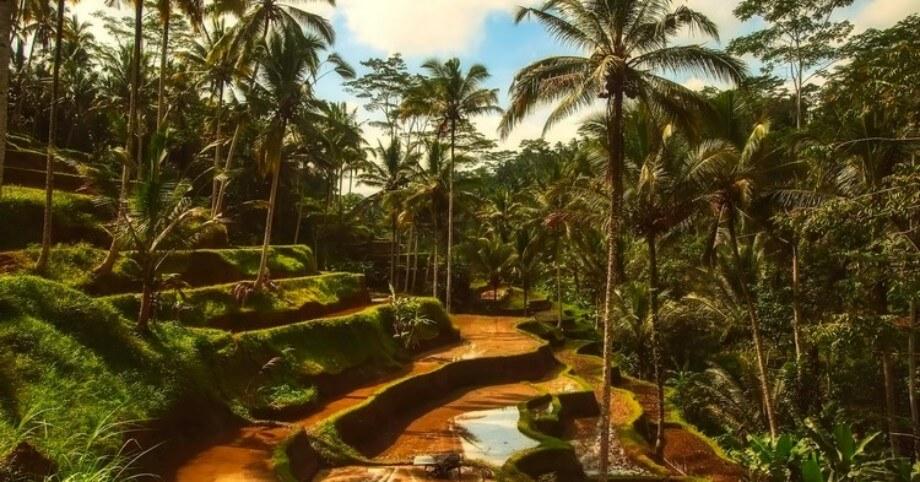 Panorama na prirodu ostrva Bali