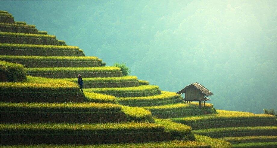 Polja na ostrvu Bali