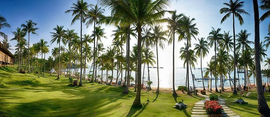 Palme na plaži tropskog ostrva