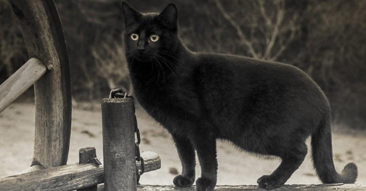 Crna mačka stoji na drvenoj ogradi