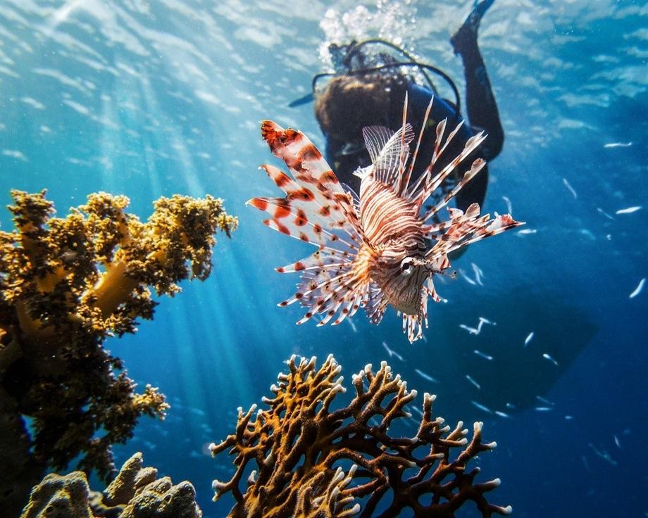 Ronilac pored riba i korala u moru