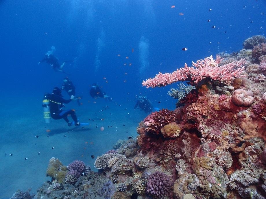Ronjenje u moru pored korala
