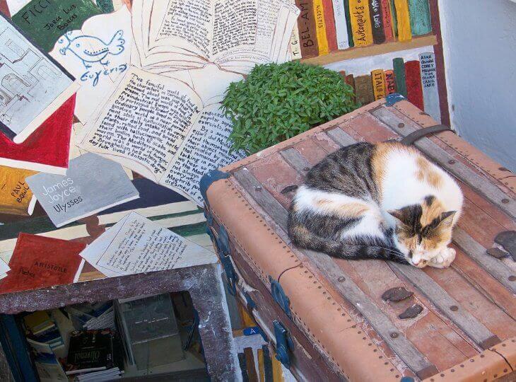 Mačka koja leži na koferu