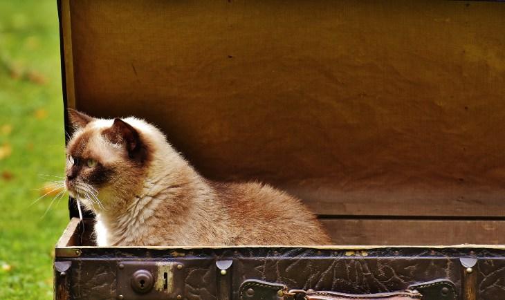 Mačka u koferu koji se nalazi napolju