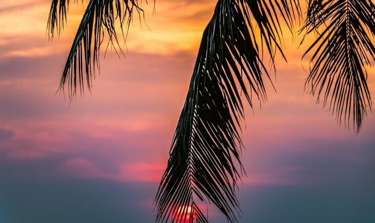 Grana palme na zalasku sunca