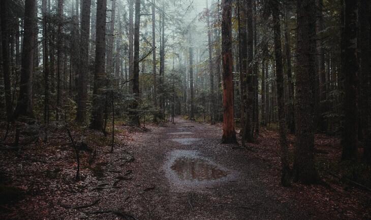 Prikaz šume i šumskog puta u okviru nacionalnog parka Tara