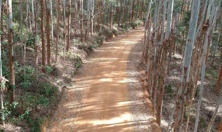 Zemljani put kroz šumu