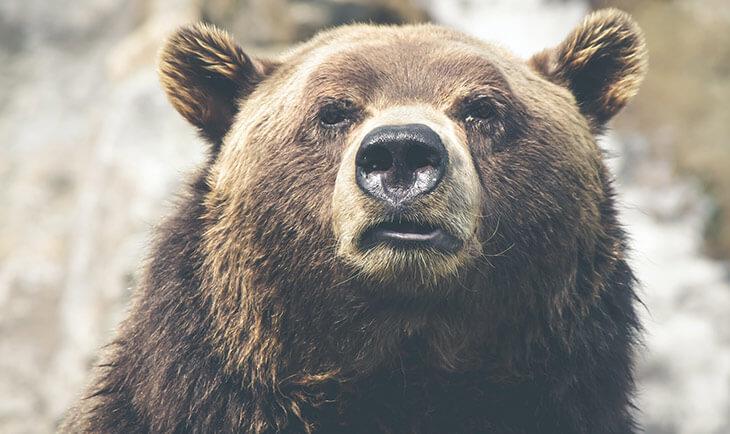 Mrki medved kao simbol planine Tara