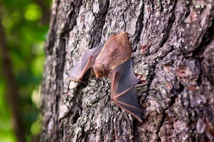 Prikaz slepog miša prikačenog za koru drveta