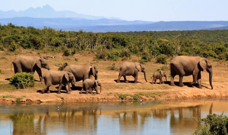 egzotični safari i slonovi