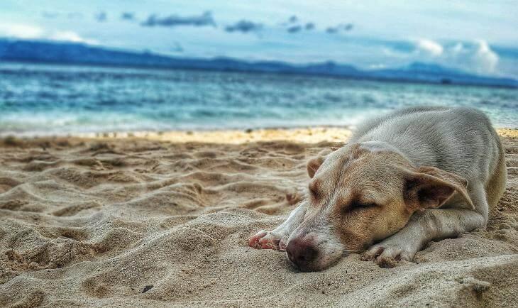 pas koji leži na plaži