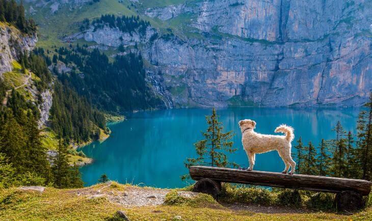 pas na drvenoj klupi